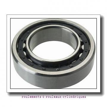 50 mm x 130 mm x 31 mm  NKE NJ410-M+HJ410 roulements à rouleaux cylindriques